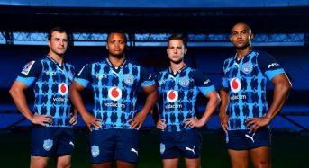 Los toros usarán margaritas en las camisetas de Super Rugby 2020